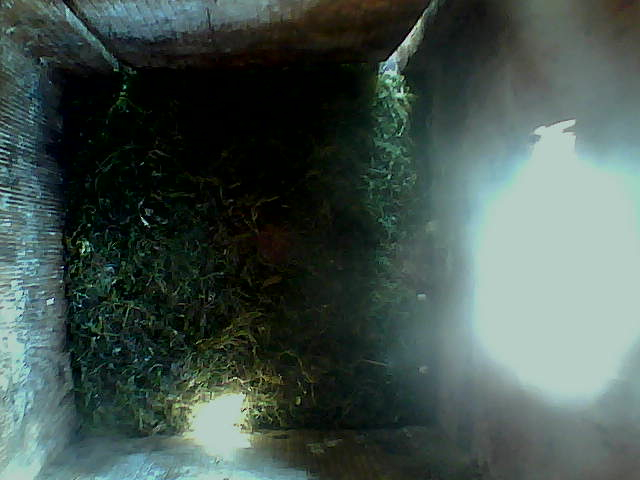 Royal Oaks Birdcam
